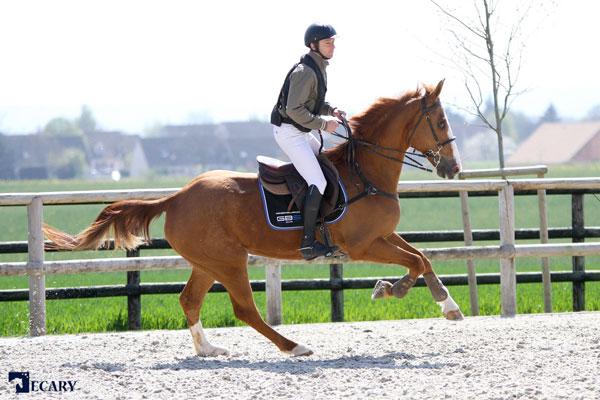 Askara équitation protection du cavalier, spécialiste airbag et Hit Air partenaires cavalier professionnel Guillaume Bourdon-Martin au Magnanville GBS-ecary